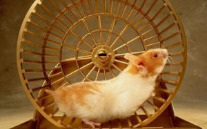 hamster-on-treadmill